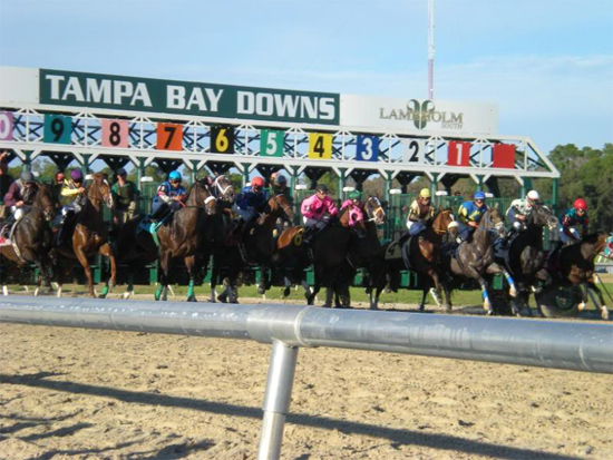 The Tampa Bay Downs Handicapper